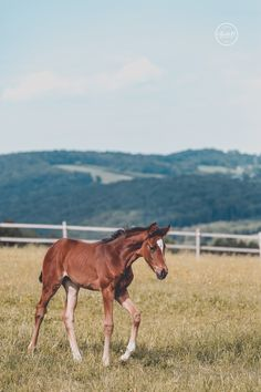 """Foal by horse photographer """"Tierlicht"""" Horse Photography, More Pictures, Horses, Animals, Outdoor, Pictures, Animales, Outdoors, Animaux"""