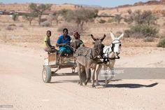 Image result Donkey, Camel, Om, Animals, Image, Animales, Animaux, Donkeys, Camels