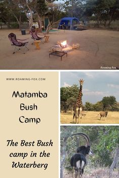 The Best Bush camp in the Waterberg - Matamba Bush Camp. A great place for a weekend getaway or en route to South Africa's neighbouring countries - Botswana or Zimbabwe #nature #wildlife #bushcamping #camping #walking #SouthAfrica Fox Facts, Travel Around The World, Around The Worlds, Bush, Camping Glamping, Zimbabwe, Africa Travel, Amazing Destinations, Weekend Getaways