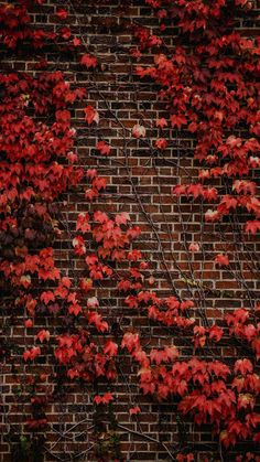 #autumnwallpaper Fall Backgrounds Iphone, Leaves Wallpaper Iphone, Orange Wallpaper, Fall Wallpaper, Wallpaper Backgrounds, Blush Wallpaper, Rain Wallpapers, Phone Wallpapers, Pumpkin Images