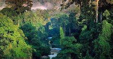 Salven a la selva amazonica