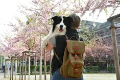 Our Border Rucksack with Border Collie Joey and Susanne in Cologne Border Collie, Bradley Mountain, Cologne, Leather Backpack, Backpacks, Adventure, Canvas, Spring, Bags