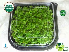 Microgreens LIVE ... No Fresher Delivery ...