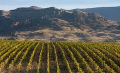 Armenia: A Pioneering Winery Brings Winemaking Back to its Roots Armenian History, Armenian Culture, History Of Wine, Wine Making, India, Wine Country, Grape Vines, Vineyard, Around The Worlds