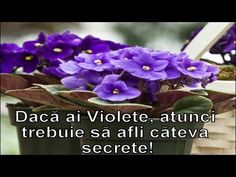 Daca ai VIOLETE trebuie sa afli cateva secrete! - YouTube