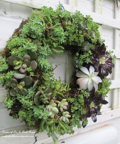 GARDEN Art DIY: DIY Project ~ Make a Succulent Wreath