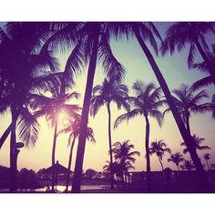 Wanna go somewhere with Palm trees again..
