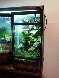 DIY Turning a 10 Gallon Aquarium into a Vertical Vivarium Aquarium Design, Reef Aquarium, Planted Aquarium, Frog Habitat, Reptile Habitat, Gecko Terrarium, Terrarium Plants, Reptile House, Poison Dart Frogs