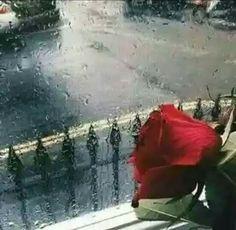قــــــم بتربيــــــة قلبـــــــك علــــــى فقــــــدان الأشيــــــاء التـــــي يحبهـــــــا حتــــــــى لا تنصــــــــدم بالواقــــــــــع