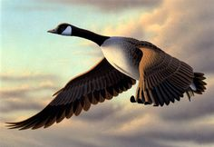 goose | 1990 CA duck stamp - painting of Canada goose