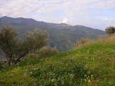 Vue sur les monts Nebrodi © RC