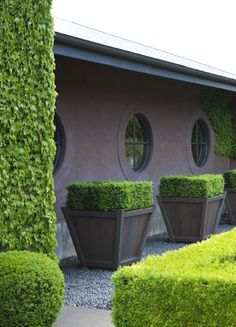 The Garden Issue Go Outside, Potted Plants, Container Gardening, Villa, Planters, Exterior, Patio, Buildings, Landscapes