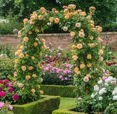 rosenbogen bepflanzen rosengarten-kletterrosen-zaun-blüten-orange-weiß-lila-pink