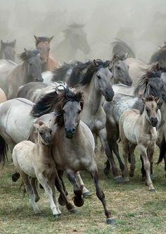 Wild horses. Photo | Karen van Gerner