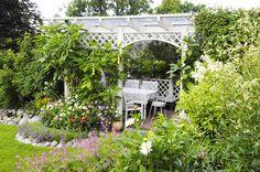 Kukkiaan juuri availeva kellopasuuna kohoaa daalioiden ja petunioiden yläpuolella kohti pergolakatoksen kattoa. Tuoksuva kukinta jatkuu aina...
