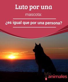 #Luto por una mascota: ¿es igual que por una persona? Cuando un #perro o un #gato muere, la mayoría de los dueños experimentan los mismos sentimientos que si perdieran a un ser querido. Los trastornos en el sueño, los problemas para alimentarse o la #depresión son más que habituales.