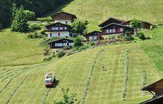 heuernte schweiz - Google zoeken