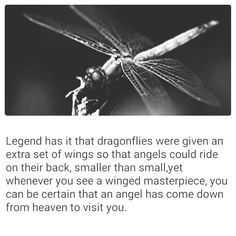 Dragonflies. ..                                                                                                                                                      More
