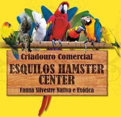Criadouro Esquilos Hamster - Olinda/PE - www.esquiloshamstercenter.com.br