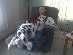 OMG that is too funny! Our 180 pound Diesel does that all the time to my husband. Lol