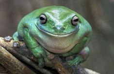 11. Zen frog, 15 Pictures With Pure Happiness On Them - (Page 11)