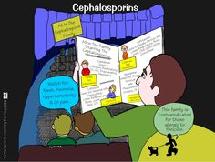 Cephalosporins Cephalosporins are a group of broad spectrum, semi-synthetic beta-lactam antibiotics derived from the mould Cephalosporium. They are divided into three groups: Cephalosporin N and C are chemically related to penicillins and Cephalosporin P a steroid antibiotic resembles fusidic acid.