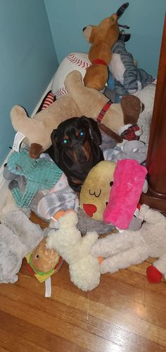 Lillyanne, mini dachshund, 1 year old Mini Dachshund, 1 Year Olds, Pets, Animals, Beautiful, Animales, Animaux, Animal, Animais