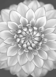 Dahlia being mesmerizing 4 by Alan Shapiro on Coloring Book Pages, Printable Coloring Pages, Greyscale Colour, Scratchboard Art, Black And White Flowers, Wood Burning Patterns, Elements Of Art, Colorful Pictures, Art Pictures