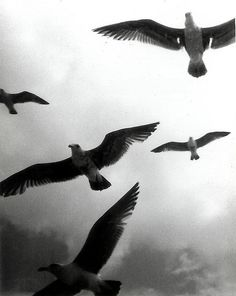 and we float \ and we fly by William A. Clark