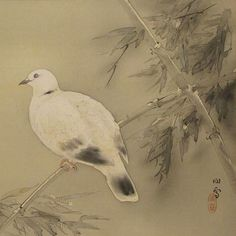 HASHIMOTO Kansetsu(橋本関雪 1883-1945)  A dove up on the branches  枝上の鳩 1900