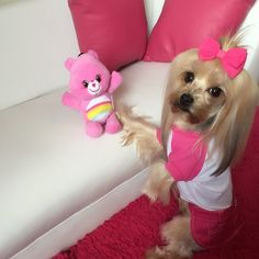 Care Bears Fetch Plush and Clothing for pets, available at PetSmart!