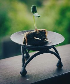Recycle your used tea bags as a starter for plants. When sprouted, plant the whole tea bag.