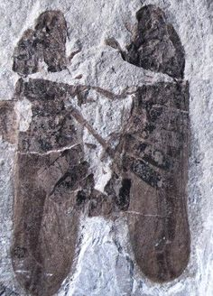 Endless Love: Oldest Fossil Of Mating Bugs Identified By Scientists... A 165 million-year-old moment of passion has been preserved for all to see with the help of one extremely rare fossil. Only 33 examples of copulating insects are known to have existed, and the majority of them have been captured in amber. Before the froghoppers fossil discovery, the oldest known fossil was one found in Lebanon that showed two tiny flies captured in 135-million-year-old amber.