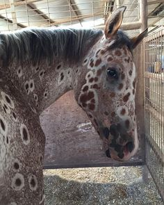 Ever seen a Horse like this? Follow @wildviewing for more