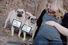 Big pug brother and Big pug sister