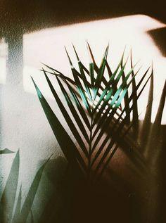 seraina. Sun Aesthetic, Film Inspiration, Tropical Art, Virgo Zodiac, Fresh Flowers, Planting Flowers, Greenery, Flora, Leaves
