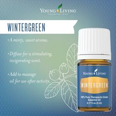 Wintergreen essential oil has a wintery, refreshing aroma. Its cooling effect on skin makes it ideal for after exercise. Try Young Living Wintergreen today. Young Living Wintergreen, Wintergreen Essential Oil, Yl Essential Oils, Yl Oils, Essential Oil Perfume, Therapeutic Grade Essential Oils, Young Living Essential Oils, Essential Oil Blends, Bodybuilding