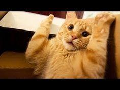Funny Cats Compilation 2014 Top Funny Cats video 2014 funny fails cats funny animals Compilation H http://www.youtube.com/watch?v=NUY6CBiKUbc