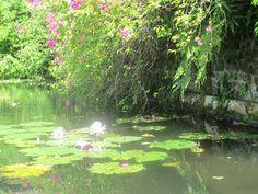 Ma photo Bali Bali, Aquarium, Golf Courses, Photos, Goldfish Bowl, Pictures, Aquarium Fish Tank, Aquarius, Fish Tank