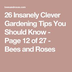 26 Insanely Clever Gardening Tips You Should Know - Page 12 of 27 - Bees and Roses