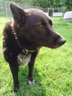 ADOPTED AUGUST 16, 2014!!!!  LUNA 4-5 yrs...sweet girl, gentle...gets along well with other dogs