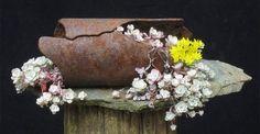 Kusamono by Tony Tickle http://yamadori.co.uk/2012/02/09/beautiful-kusamono-in-my-garden/