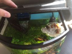 Homemade island for aquariums with land-dwellers (I.E. fiddler crabs) - Imgur