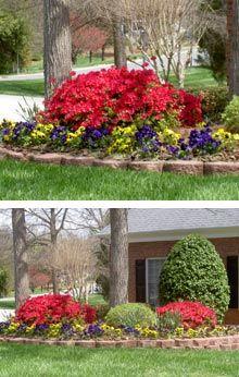 92 Best Encore Azaleas For My Garden Images Landscape