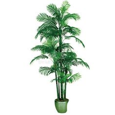 TCB-06 280CM Artificial Hawaii kwai Areca Palm Small Palm Trees, Small Palms, Cactus Plants, Majorca, Plant Leaves, Hawaii, Cacti, Cactus, Hawaiian Islands