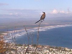 And a little visitor dropped by #Hermanus