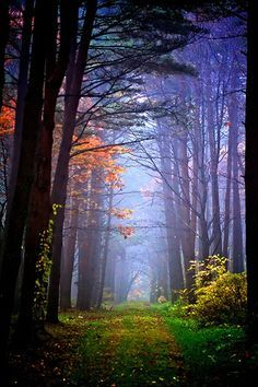 The place I met you in my dreams.  Hachimantai, Japan. Forests.