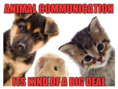 Do you want to learn how to Communicate with Animals? Click the picture to view all of our online courses! #animalcommunication