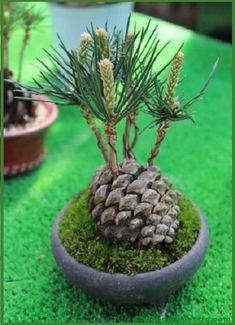 Bonsai trees and associated plants. Focussing on styling bonsai, showing member's trees, bonsai care and general help. Indoor Garden, Garden Art, Indoor Plants, Outdoor Gardens, Garden Design, Indoor Cactus, Garden Stakes, Landscape Design, Bonsai Plants