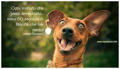 Ogni minuto che passi arrabbiato, sono 60 secondi di felicità che hai PERSO. (Albert Einstein)